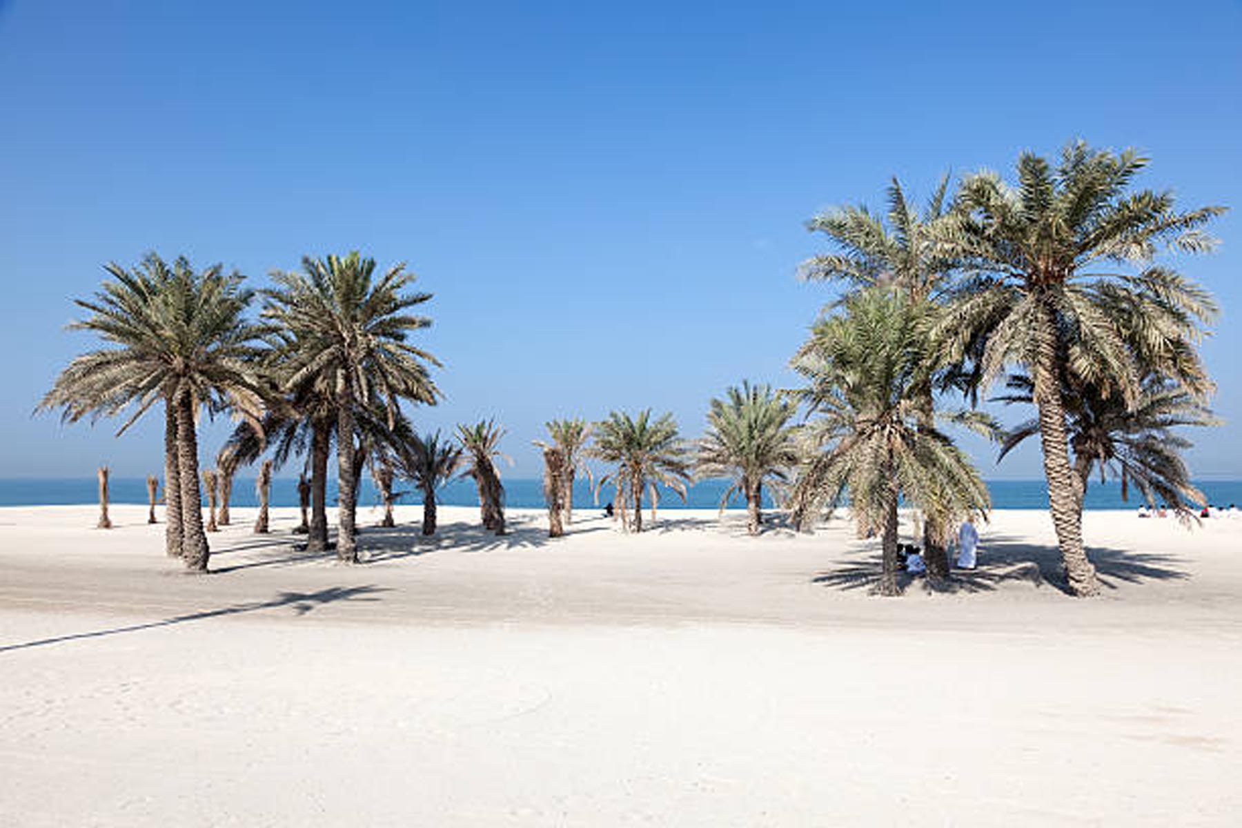 Beautiful beach with palm trees in Umm Al Quwain, United Arab Emirates