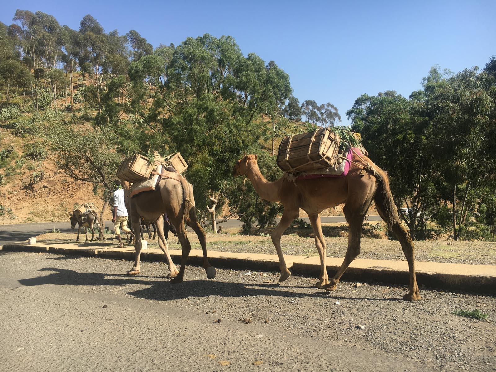 eritrea (26)