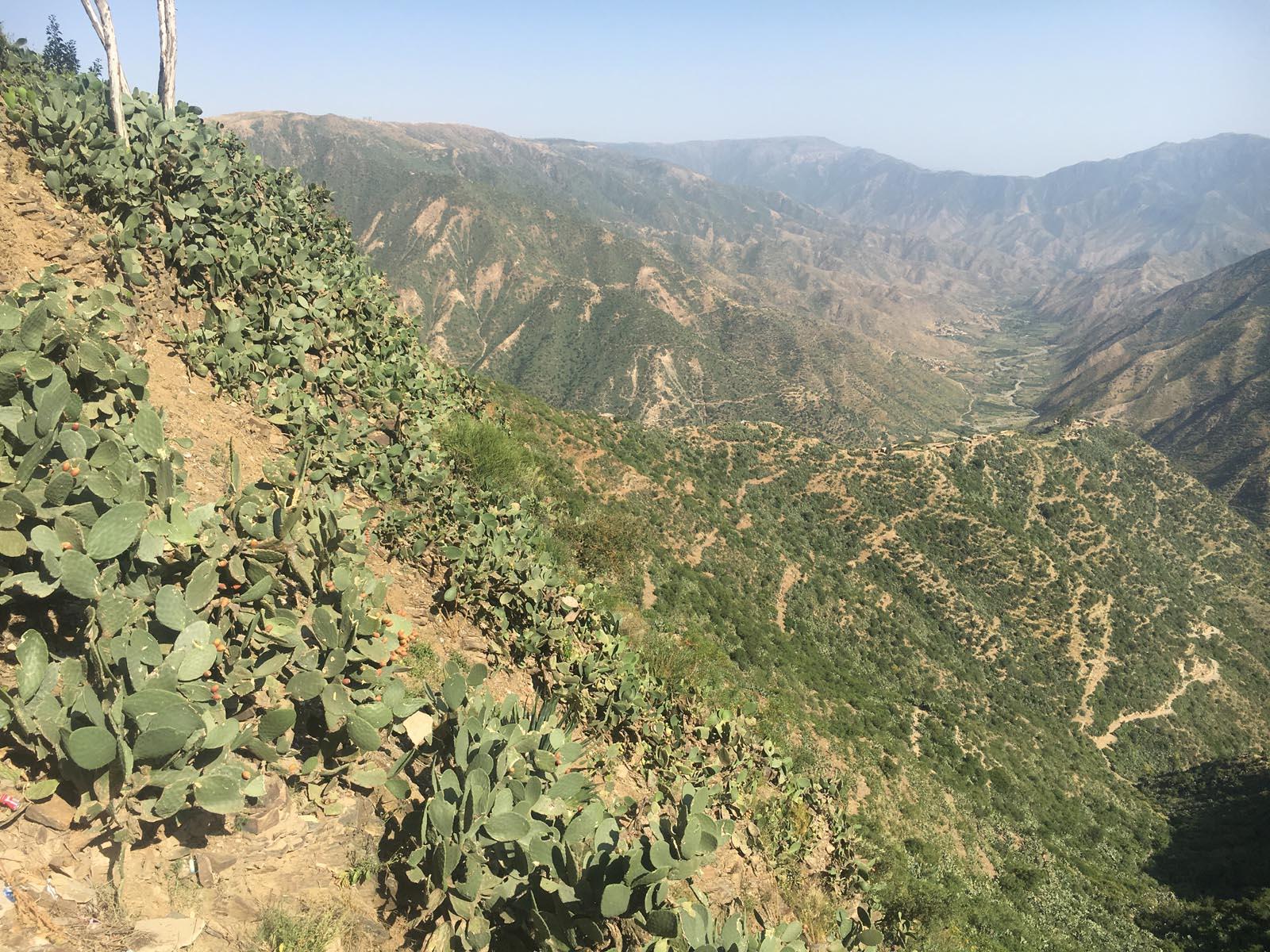 eritrea (28)