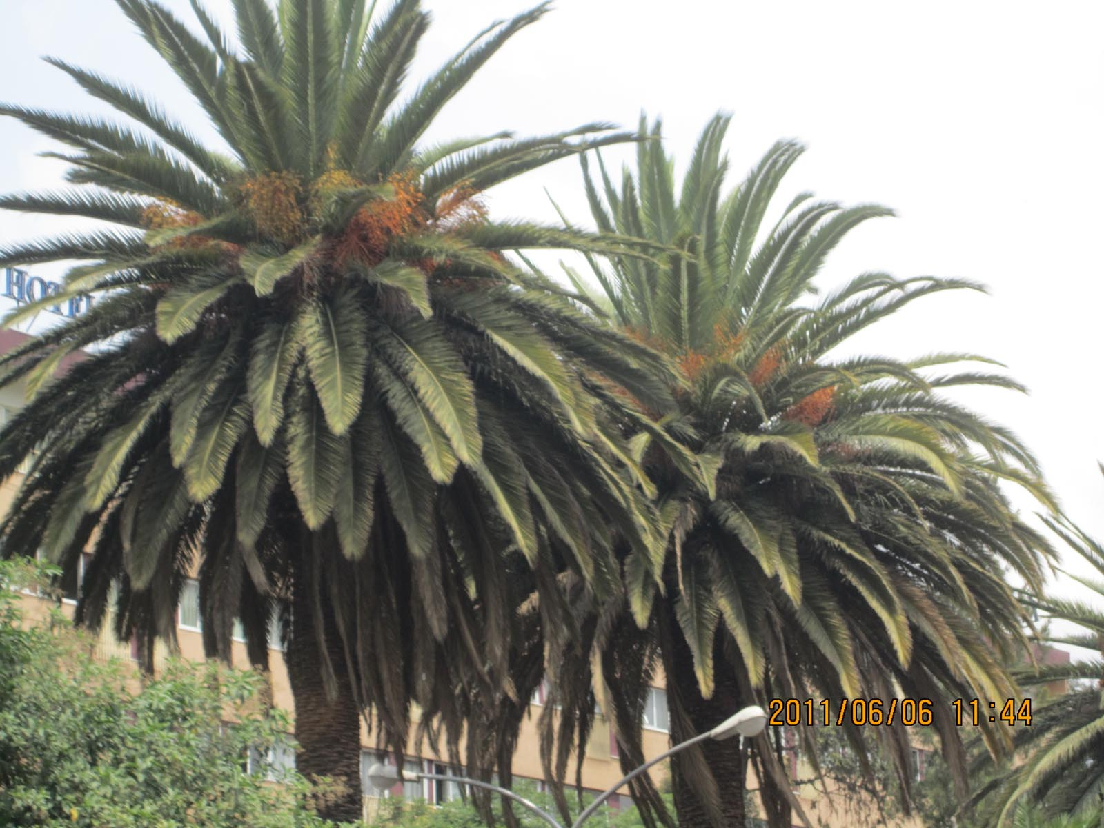 ethiopia (12)