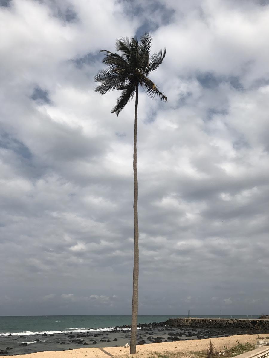 Santo Tomé (13)